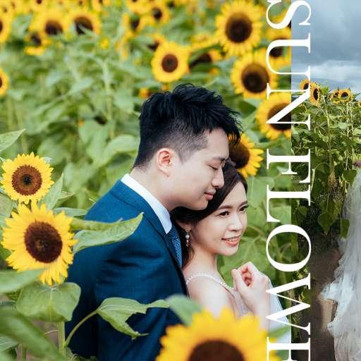 【香港‧向日葵】| HK Sunflower Prewedding|香港太陽花婚紗攝影